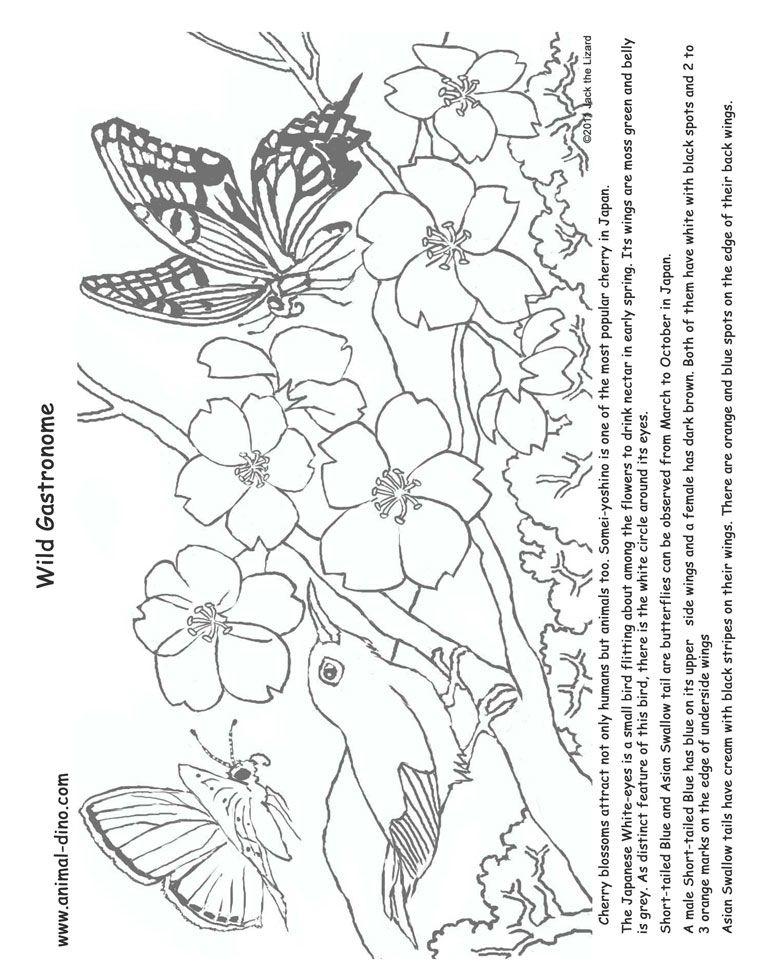 757x980 Coloring Page Happy Orange Blossom Strawberry Shortcake Tattoo