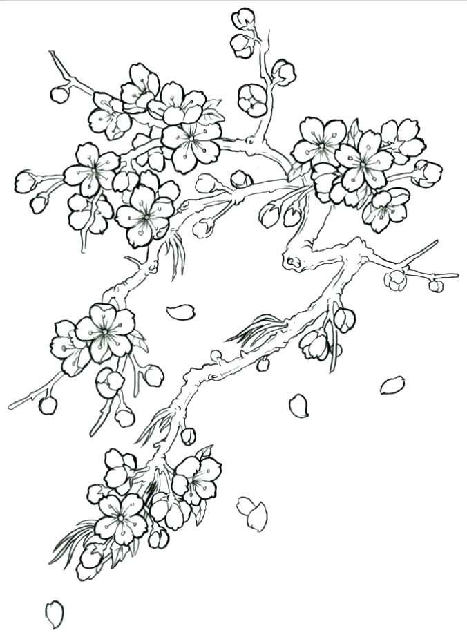 676x932 Idea Cherry Blossom Coloring Pages Or Cherry Blossom Coloring