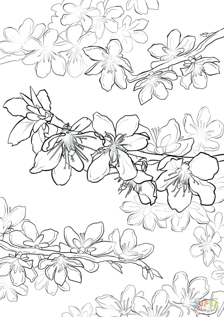 725x1024 Ideas Cherry Blossom Coloring Pages Or Blossom Coloring Page