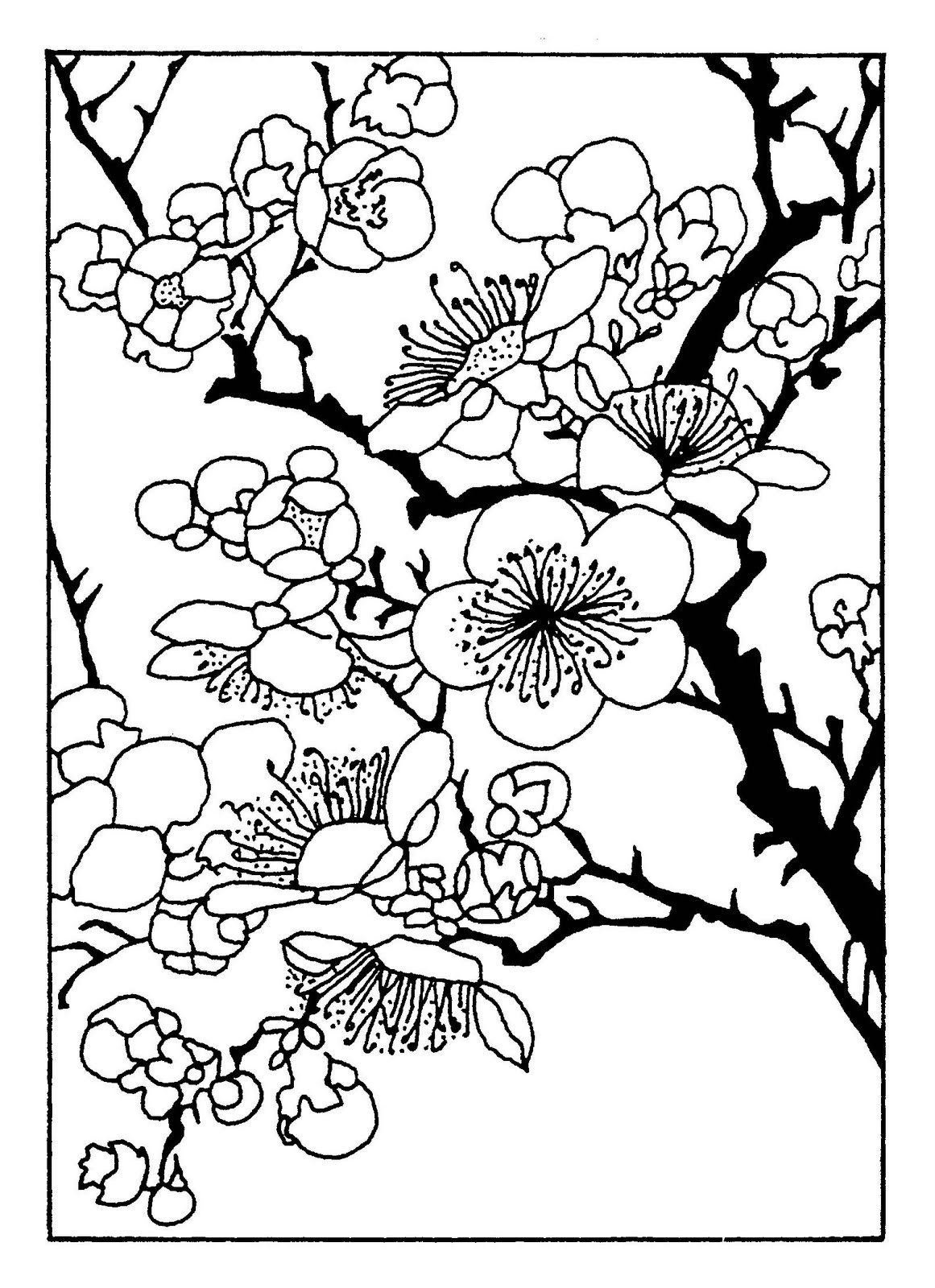 1161x1600 Interesting Japanese Cherry Blossom Coloring P