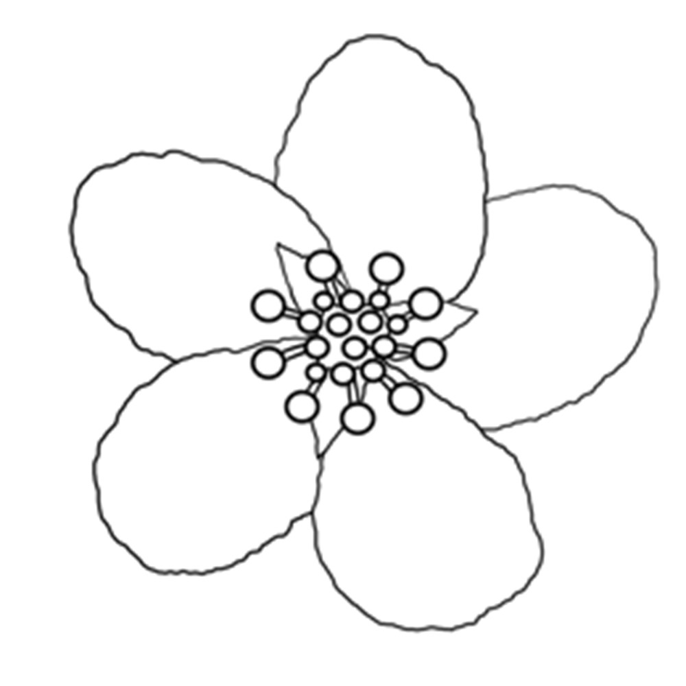 1000x1000 Willpower Cherry Blossom Coloring Pages