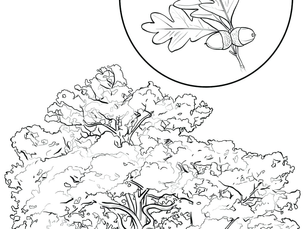 1020x768 Cherry Blossom Coloring Pages Cherry Blossom Coloring Pages Cherry