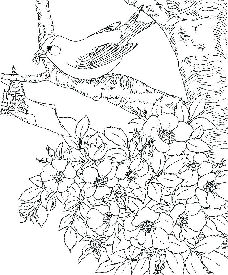 736x886 Cherry Blossom Coloring Pages Cherry Blossom Tree Coloring Page