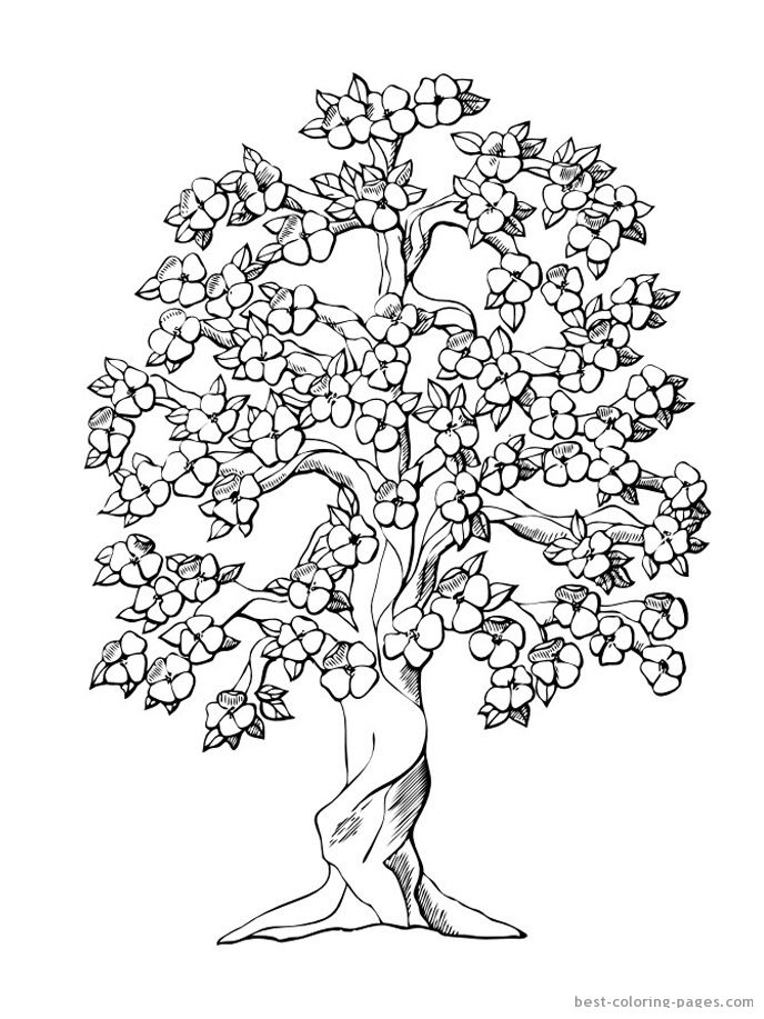 688x917 Cherry Blossom Coloring Pages New Japanese Cherry Blossom Tree