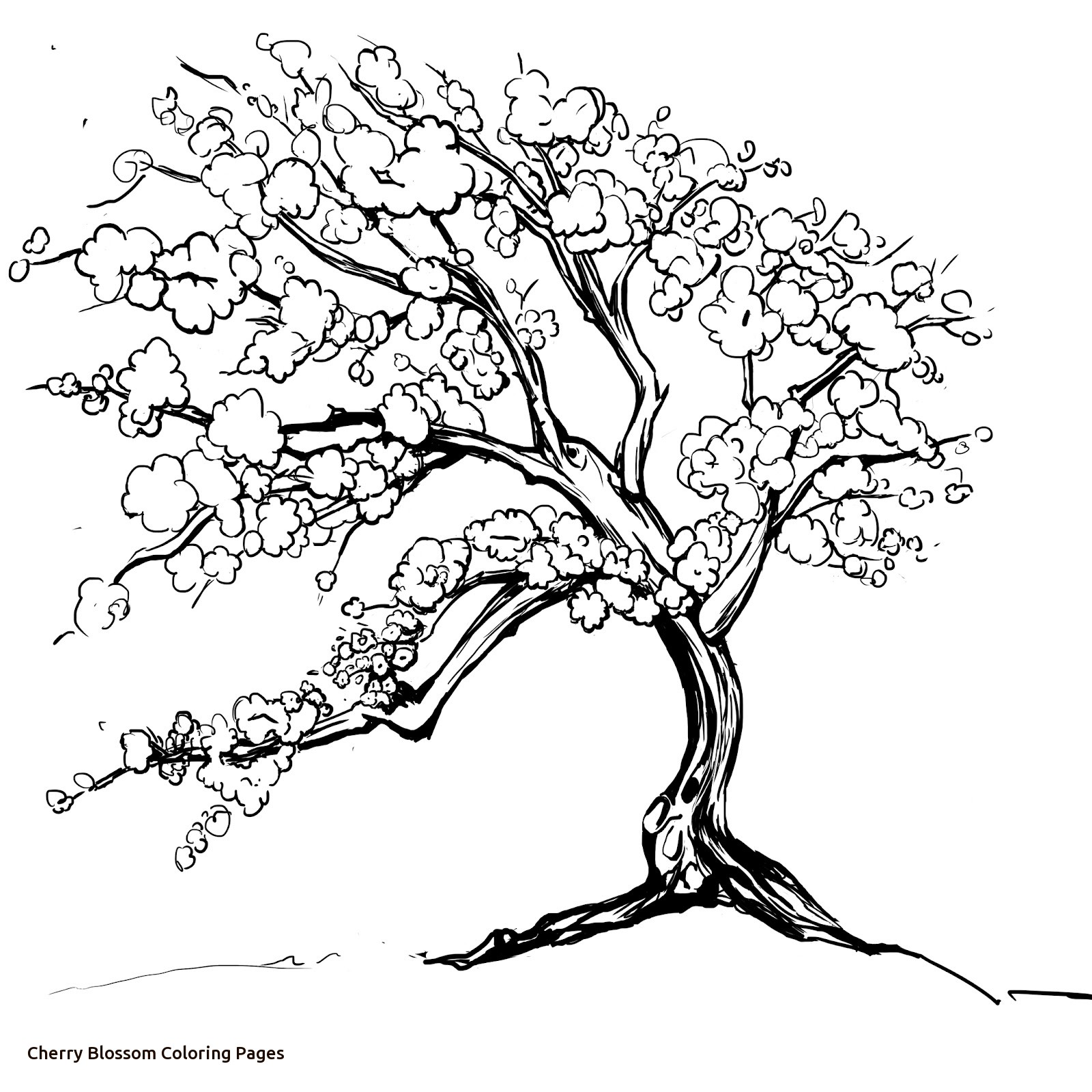 1600x1600 Cherry Blossom Coloring Pages Within Tree Page Glum