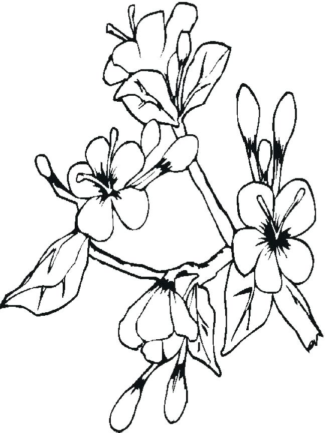 648x864 Best Cherry Blossom Tree Coloring Page New Cherry Blossom Tree