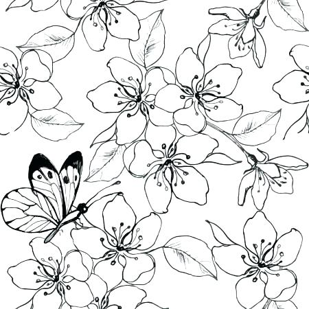 450x450 Lovely Cherry Blossom Coloring Pages Or Garden More Coloring Pages