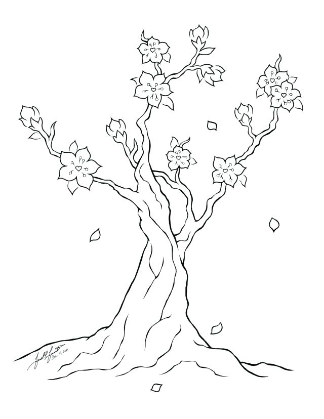 640x828 Tree Coloring Picture Cherry Blossom Tree Coloring Page Cherry