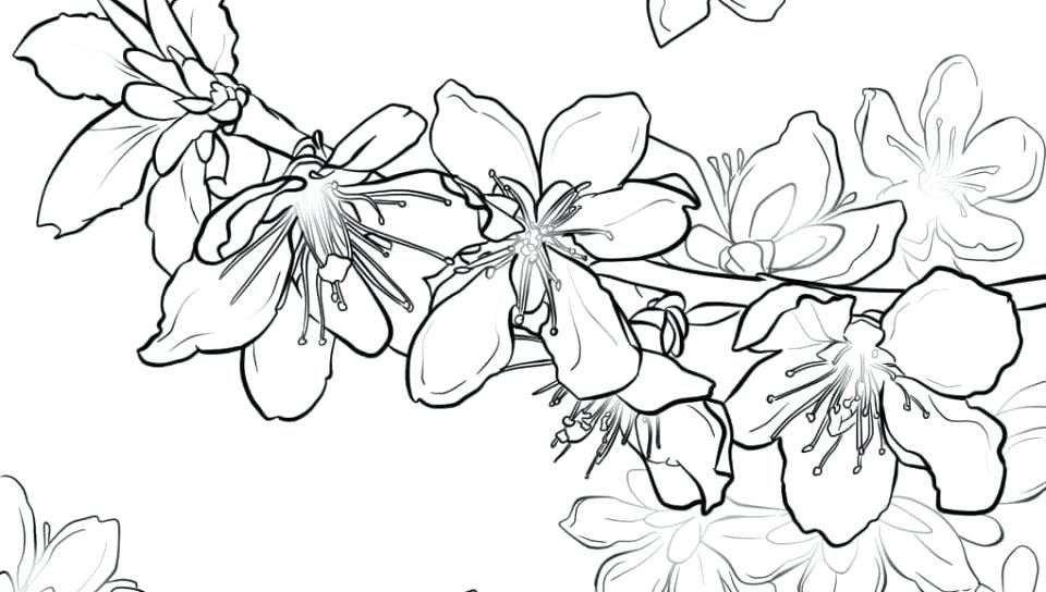 960x544 Wonderful Cherry Blossom Coloring Pages Welcome To Publications
