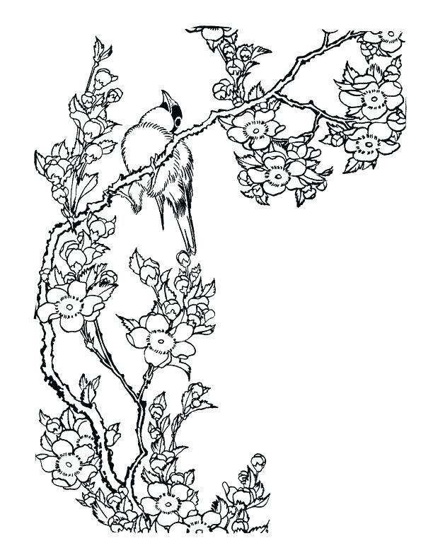 612x792 Cherry Blossom Coloring Pages