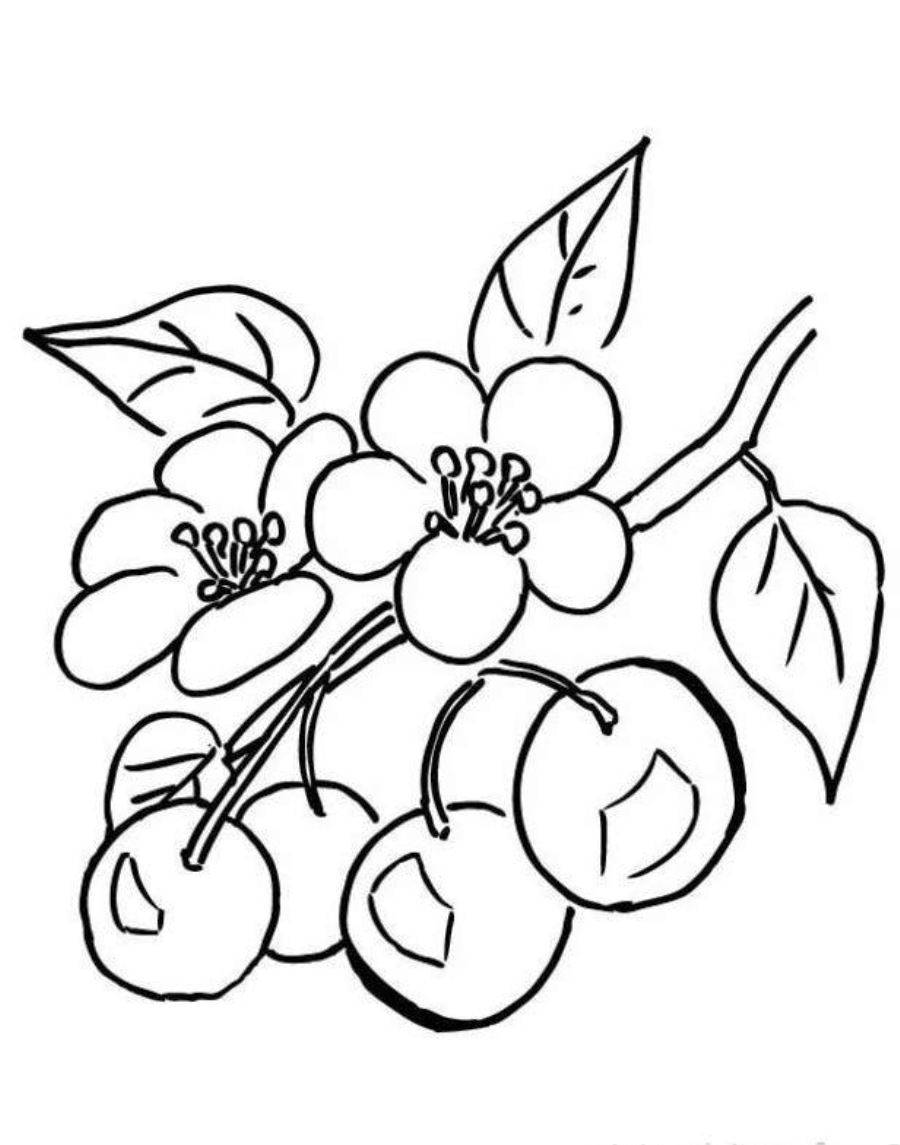 900x1145 Branch Of Cherry Blossom Tree Coloring Page School Classroom