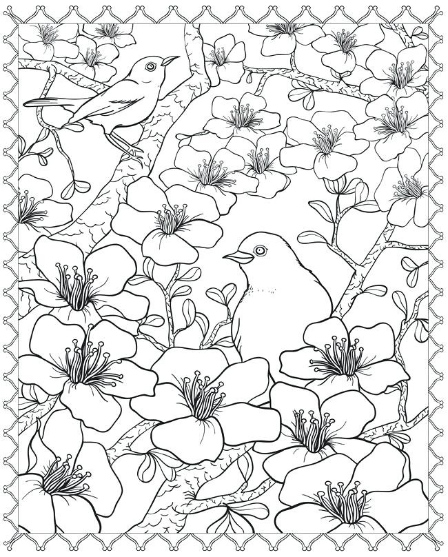 650x808 Flower Page Printable Coloring Sheets Bird And Cherry Blossom