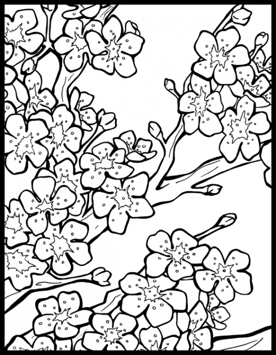 569x730 Free Cherry Blossom Coloring Page To Print Out Fun Coloring
