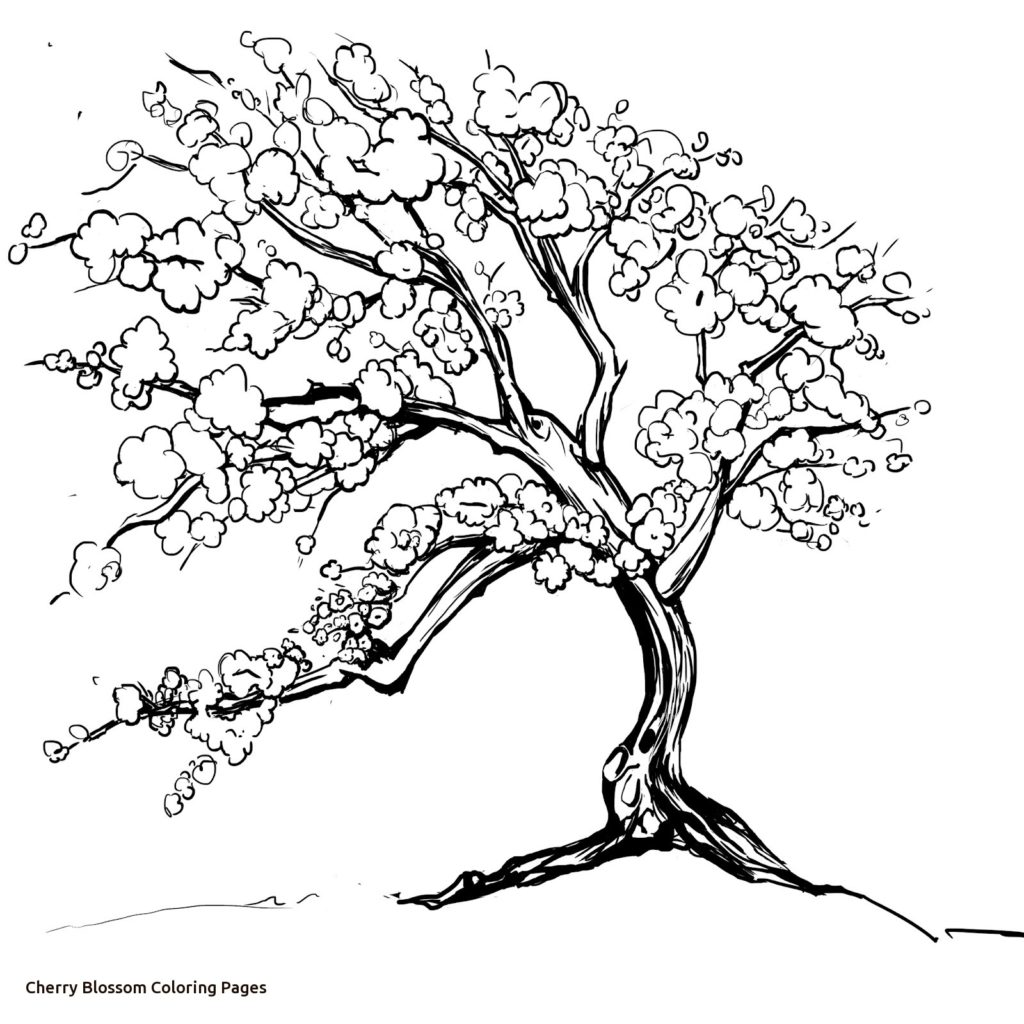 1024x1024 Cherry Blossom Coloring Page New Design Printable Sheet Best