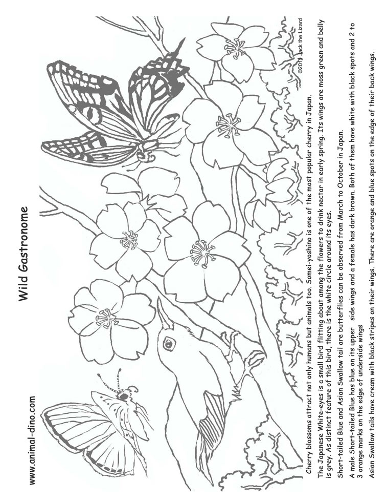 757x980 Cherry Blossom Coloring Pages