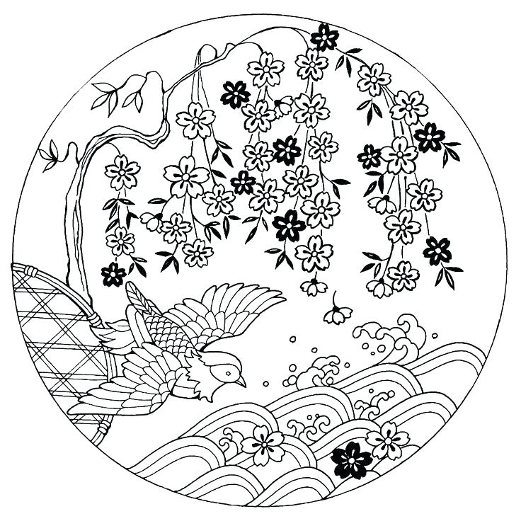 736x736 Cherry Blossom Coloring Pages To Draw A Cherry Tree Step