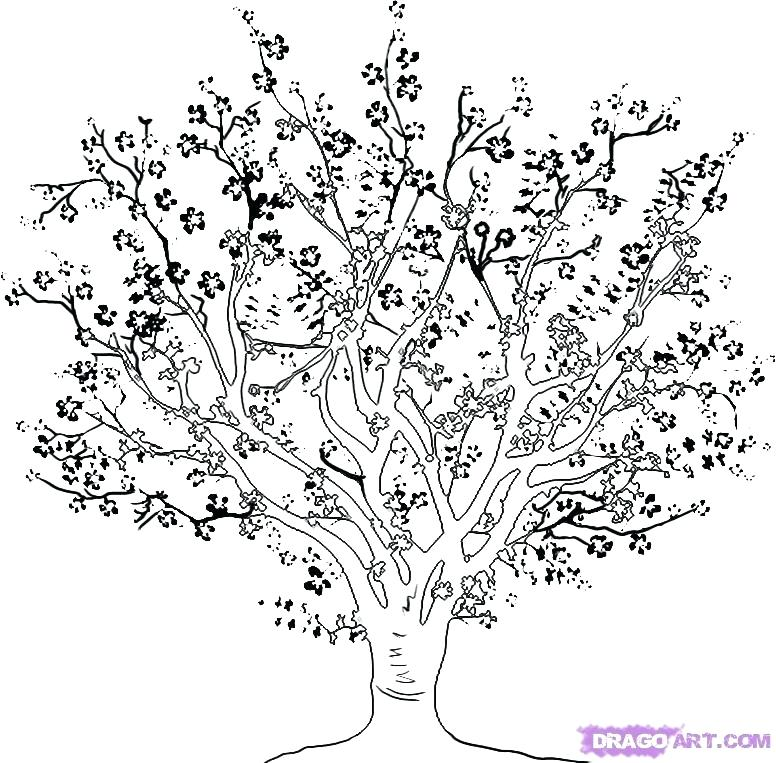 776x763 Cherry Blossom Tree Coloring Page Cherry Blossom Coloring Pages