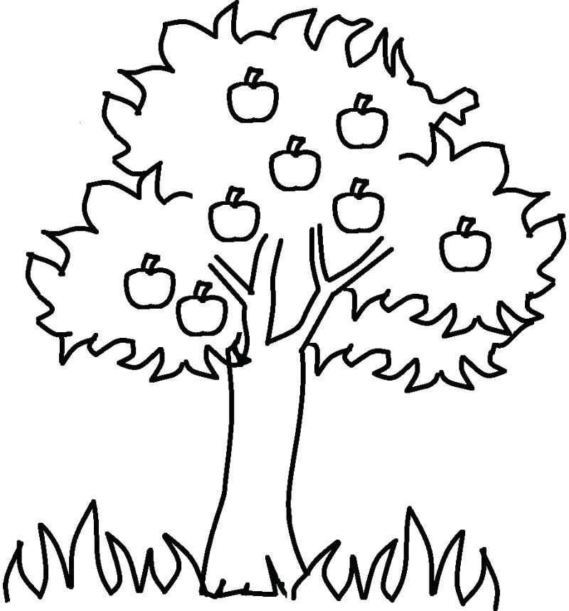 800x859 Coloring Pages Trees To Draw A Cherry Tree Step Coloring Page