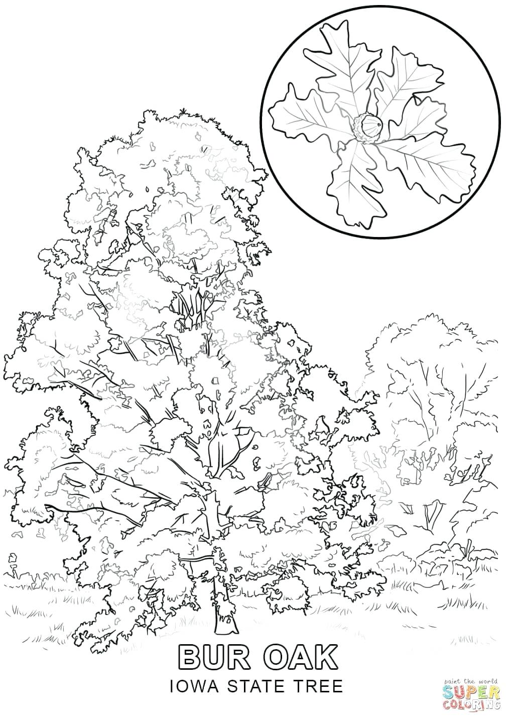 1020x1440 Coloring Page Trees Coloring Pages Click The Blooming Cherry