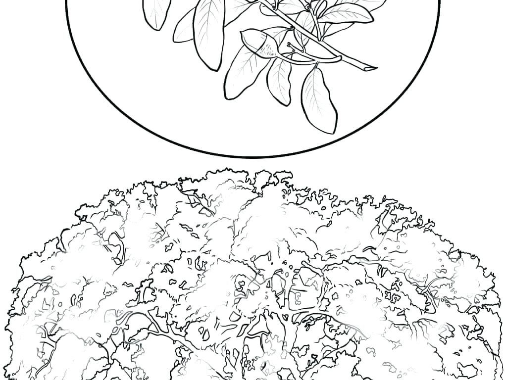 1020x768 Bamboo Coloring Pages Luxury Cherry Blossom Coloring Pages