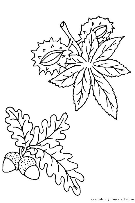 Chestnut Coloring Pages