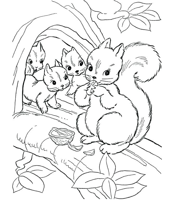 670x820 Cute Animals Coloring Pages Wild Animal Coloring Pages Squirrel