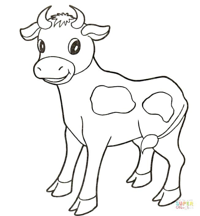 652x704 Colorear Chicago Bulls Baby Cow Coloring Page Free Printable