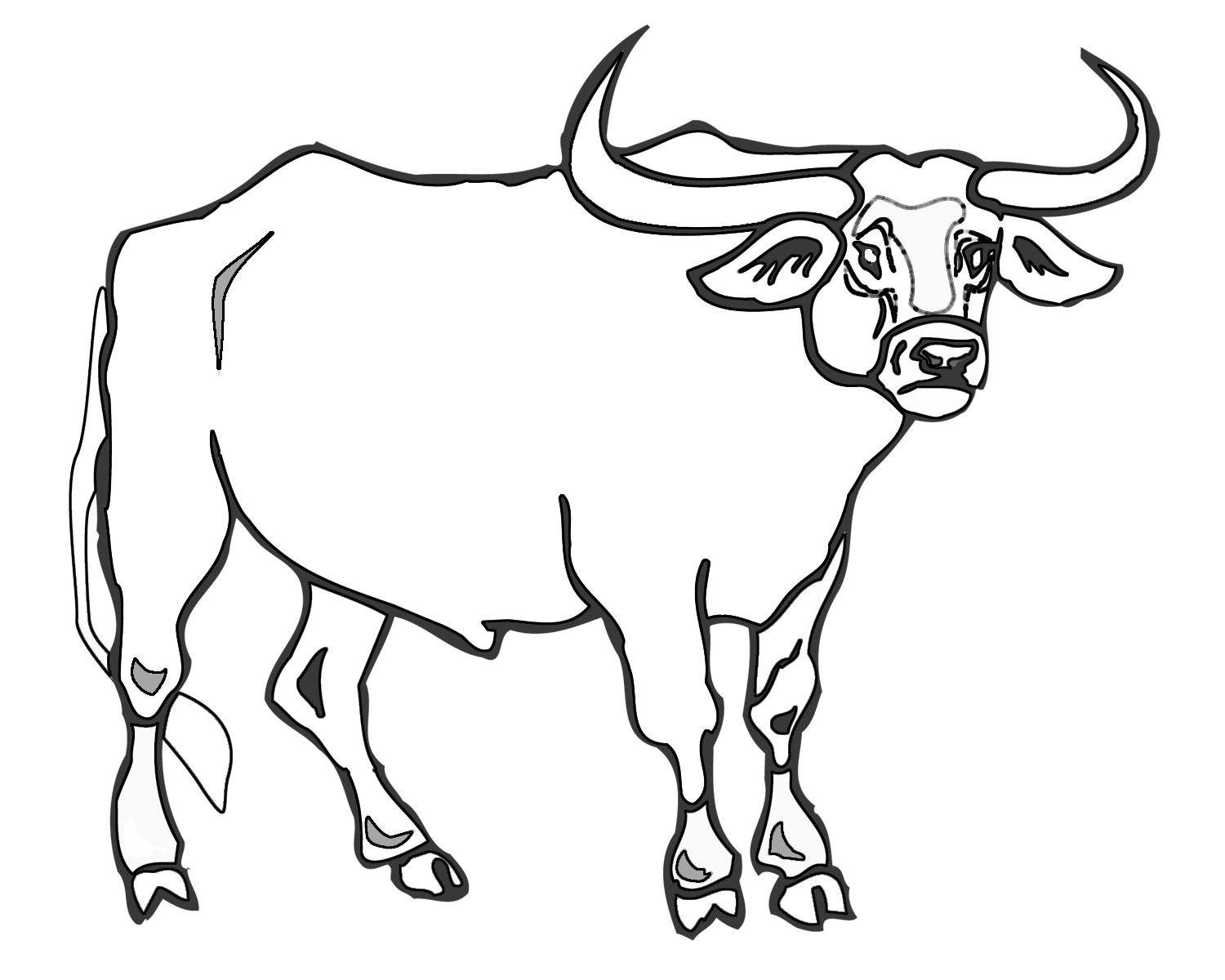 1500x1200 Bull Coloring Page, Bull Printable Coloring Pages