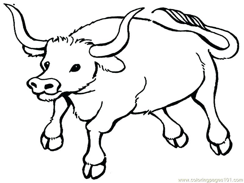 800x600 Bull Coloring Pages Printable Realistic Riding Rider Bulldog Bull