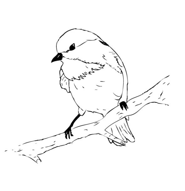 590x608 Black Capped Chickadee Coloring Page Embroidery Patterns
