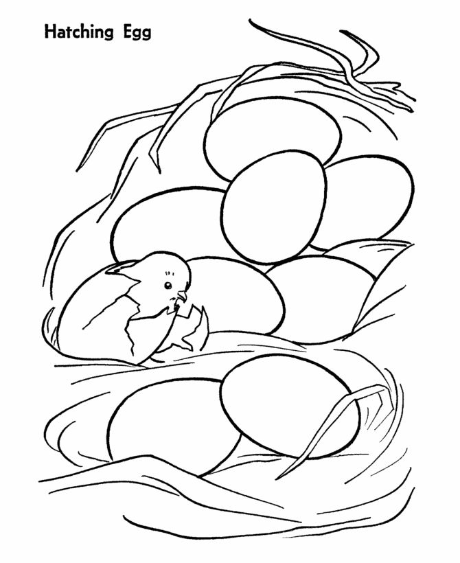 Chicken Egg Coloring Page
