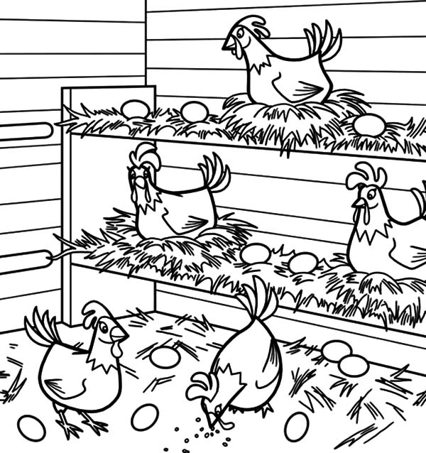 600x638 Chicken Lays Egg In Chicken Coop Coloring Pages