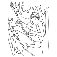 Chimp Coloring Pages