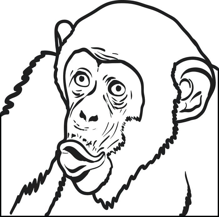 700x693 Chimpanzee Coloring Page Printable Chimpanzee Coloring Page Baby