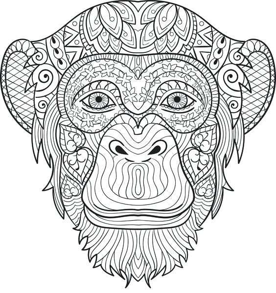 564x599 Chimpanzee Coloring Pages Chimpanzee Coloring Pages Baby