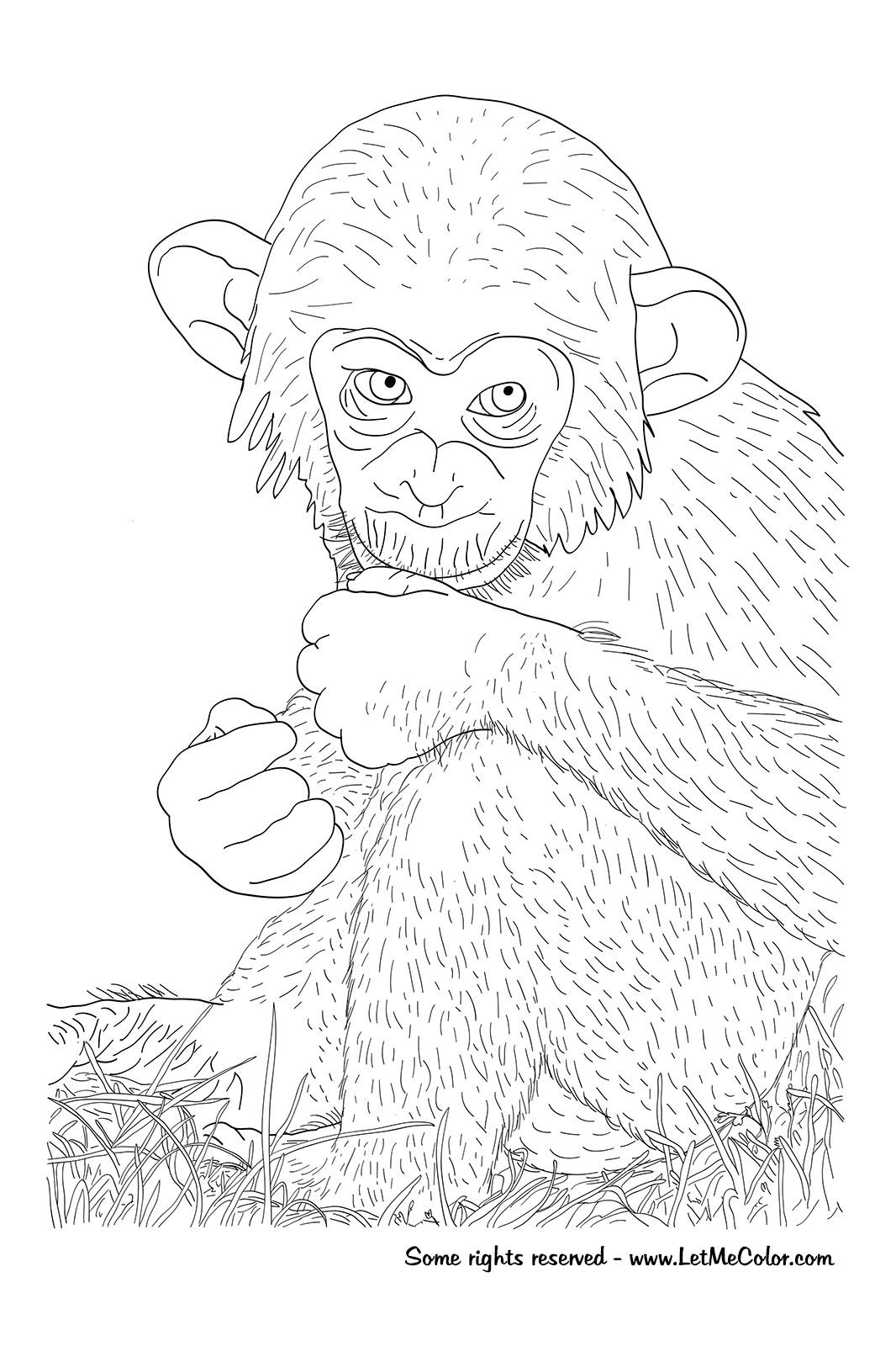 1066x1600 Chimpanzee Coloring Pages Prepossessing Acpra