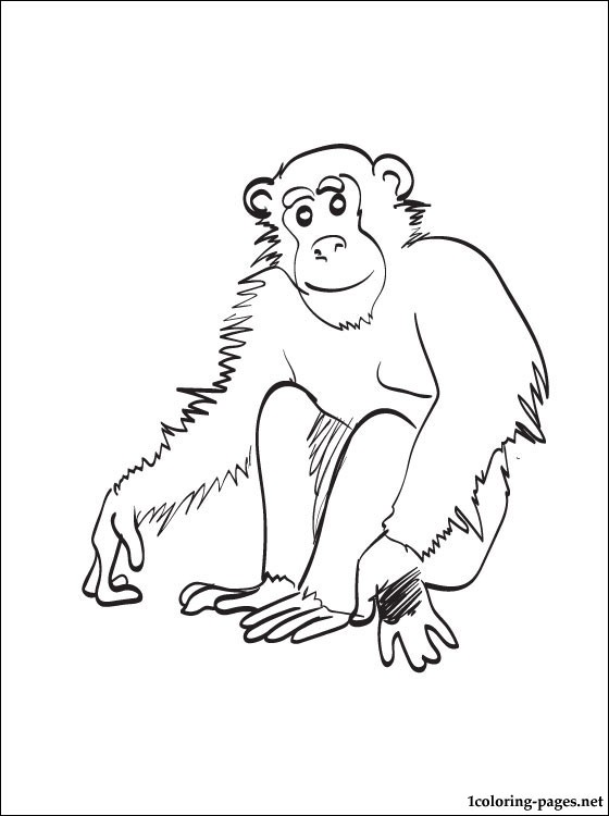 560x750 Chimpanzee Coloring Page Coloring Pages
