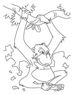 236x305 Free Printable Chimpanzee Coloring Pages For Kids Chimpanzee