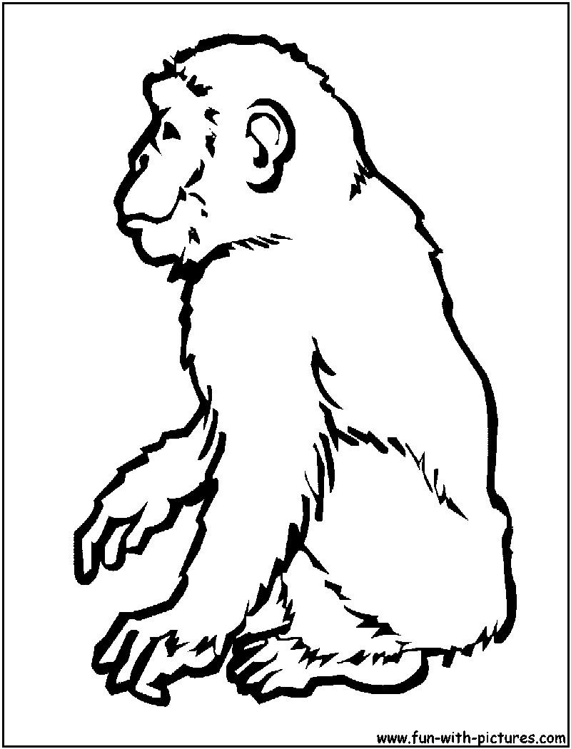 800x1050 Last Chance Chimpanzee Coloring Page Gites Loire Valley Endear Acpra
