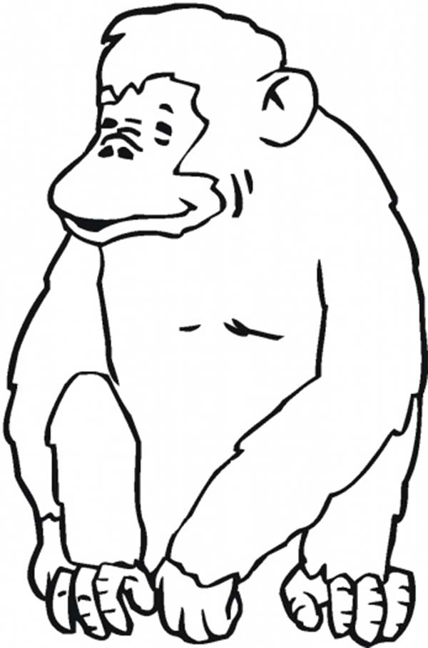 600x908 Laughing Chimpanzee Coloring Page Coloring Sun