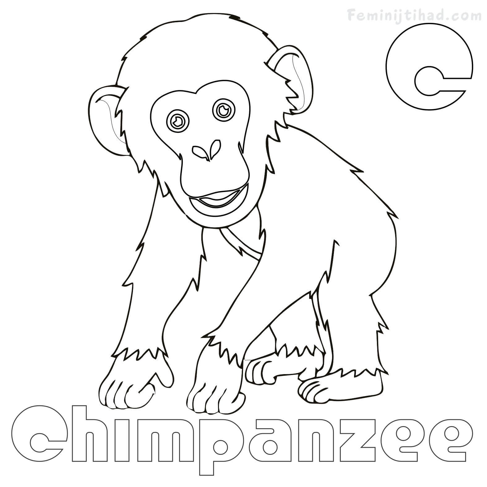 1575x1575 Luxury Chimpanzee Coloring Page Pictures