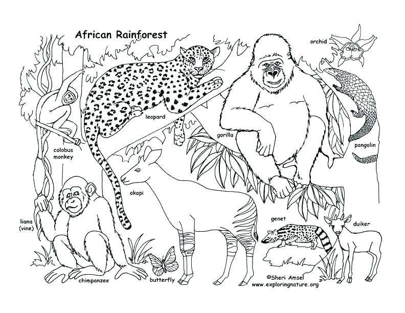 792x612 Orangutan Coloring Page Orangutan Colouring Sheets