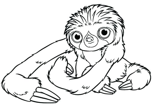 600x428 Sloth Coloring Page Sloth Coloring Pages Coloring Pages Sloth Page