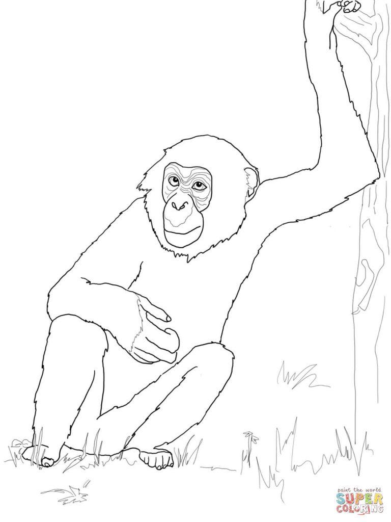768x1024 Bonobo Chimpanzee For Coloring