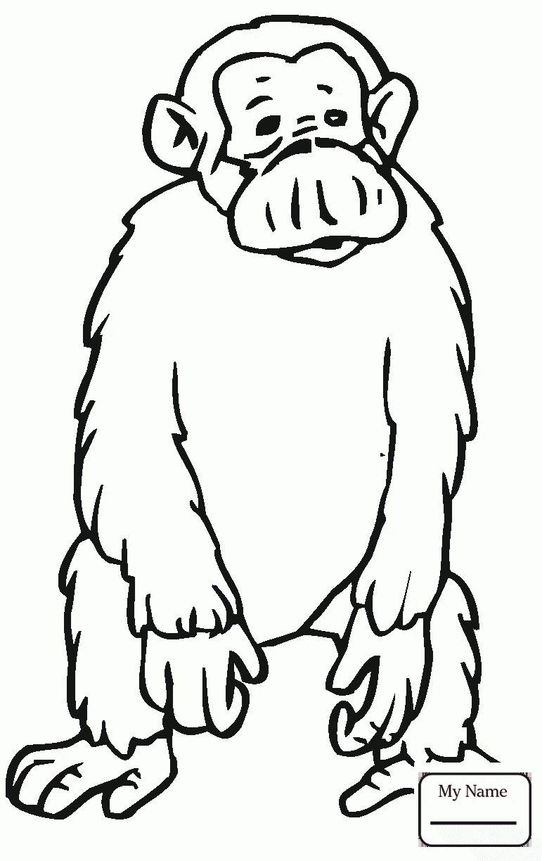 771x1224 Unique Chimpanzee Page To Color Gallery Printable Coloring Sheet