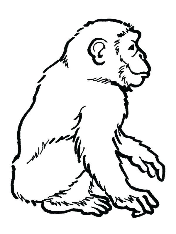 600x800 Chimpanzee Coloring Page