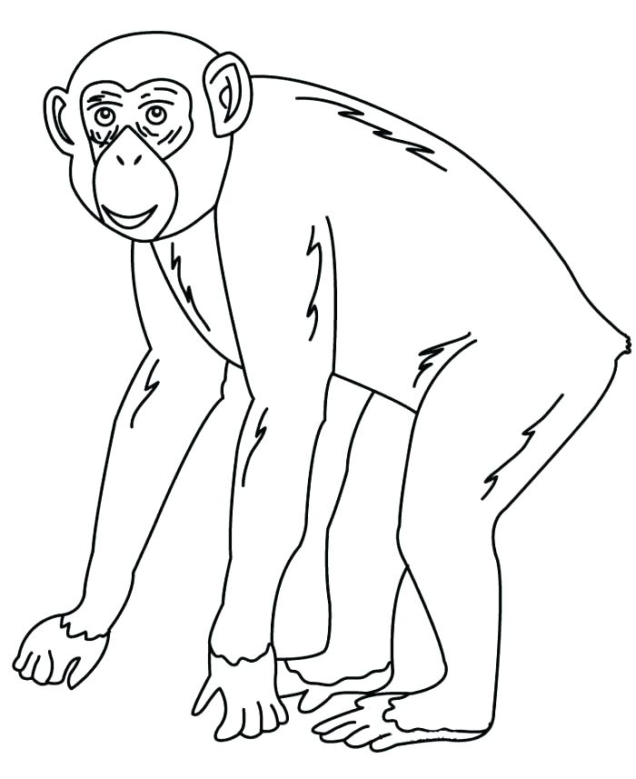 700x857 Chimpanzee Coloring Page