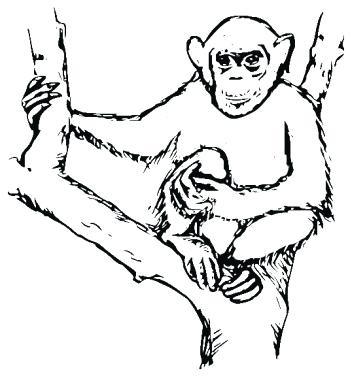 350x379 Chimpanzee Coloring Page Chimpanzee Coloring Pages To Go With Our