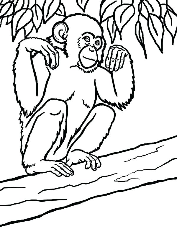 600x776 Chimpanzee Coloring Page Click To See Printable Version Of Common