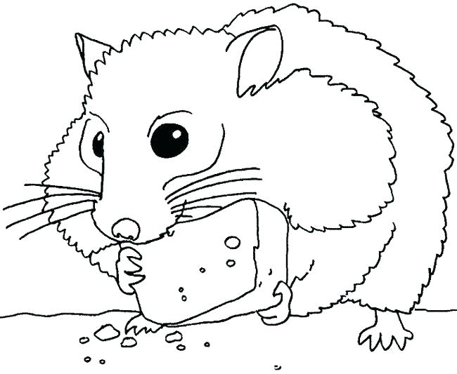 650x533 Coloring Page Hamster Gerbil Pages Animal Chinchilla Thanksgiving